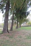 Grote bomen in de herfst met groene bladeren Stock Foto