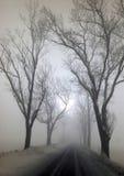 Grote bomen in de mist Stock Foto's