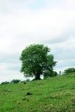 Grote bomen in de tuin stock afbeelding