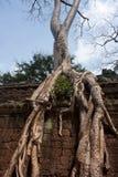 Grote bomen die binnen - tussen de stenen met hun wortels in de Tempel van Ta Prohm in de Angkor-Tempel in Kambodja groeien royalty-vrije stock fotografie