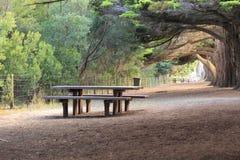 Grote bomen in het park Stock Fotografie