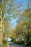 Grote bomen, landweg, blauwe hemel, Engeland Stock Foto's