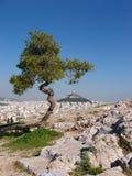 Grote Bonsai - Athene, Griekenland Stock Foto
