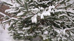 Grote bont-boom tak met sneeuw Het landschap van de winter stock videobeelden