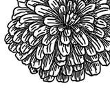 Grote bont de herfstbloem Royalty-vrije Stock Afbeelding