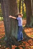 Grote boom Stock Afbeeldingen