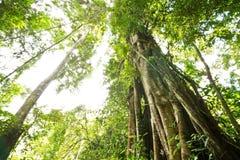 Grote boom in berg Royalty-vrije Stock Foto