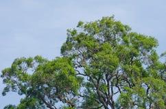 Grote boom in bos Stock Afbeeldingen