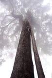Grote boom in de mist Royalty-vrije Stock Afbeeldingen