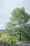 Grote boom in de tuin stock afbeeldingen