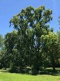 Grote boom in de tuin royalty-vrije stock foto's