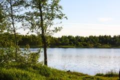Grote boom dichtbij de rivier stock fotografie