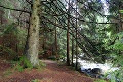Grote boom in diep bos royalty-vrije stock fotografie