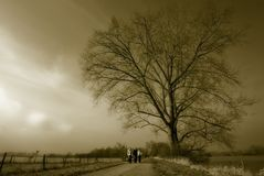 Grote boom en kleine groep vrouw royalty-vrije stock afbeelding