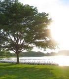 Grote boom en Pedaalbotenachtergrond Stock Afbeelding