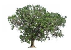 Grote boom en grote struiken op witte achtergrond royalty-vrije stock afbeelding