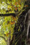 Grote boom en Tak met kleurrijke Bladeren, elften stock foto's