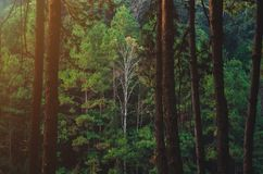 Grote boom in het bos royalty-vrije stock fotografie