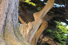 Grote boom in het park Stock Foto's