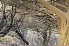 Grote boom in het park Royalty-vrije Stock Foto's