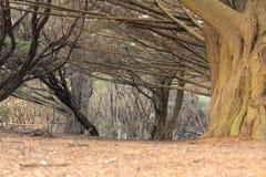 Grote boom in het park Stock Afbeeldingen