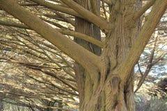 Grote boom in het park Stock Foto