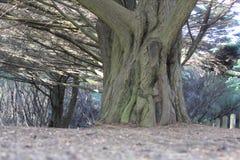 Grote boom in het park Stock Fotografie