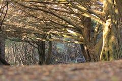 Grote boom in het park Royalty-vrije Stock Afbeelding