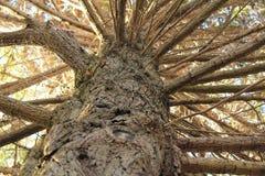 Grote boom in het park Royalty-vrije Stock Foto