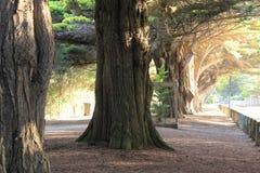Grote boom in het park Royalty-vrije Stock Fotografie