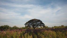 Grote boom in het park Stock Afbeelding