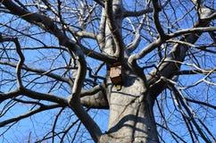Grote boom, klein vogelhuis Stock Fotografie