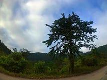 Grote boom met blauwe hemel en wolk Stock Afbeeldingen