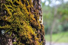 Grote boom met groene mos Royalty-vrije Stock Afbeelding