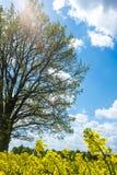 Grote boom met hemel en bloemen Stock Foto