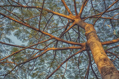 Grote boom met vele takken Stock Foto's