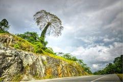 Grote boom op de heuvel dichtbij kant van de weg Royalty-vrije Stock Foto's