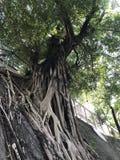 Grote boom op een helling van stedelijk gebied royalty-vrije stock afbeeldingen