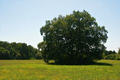 Grote boom op het centrum van weide stock afbeelding