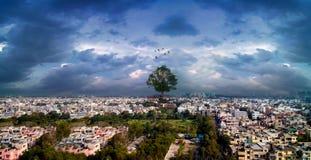 Grote boom over stad met dramatische hemel openlucht Royalty-vrije Stock Afbeeldingen