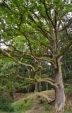 Grote boom in park Royalty-vrije Stock Afbeeldingen
