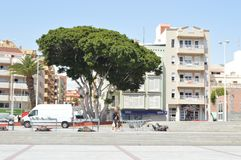 Grote boom in stad van Tenerife Royalty-vrije Stock Foto's