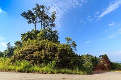 Grote boomberg met blauwe hemel Stock Afbeelding