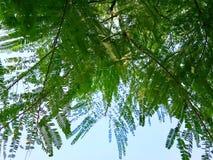 Grote boombladeren die de grond behandelen stock fotografie
