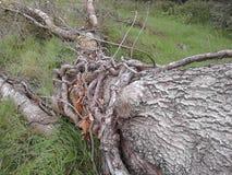 Grote boomboomstam Stock Afbeelding