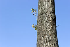 Grote boomboomstam Royalty-vrije Stock Afbeelding