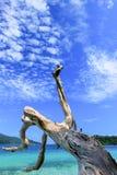 Grote boomboomstam met duidelijke hemelachtergrond Royalty-vrije Stock Afbeeldingen
