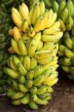 Grote bos van bananen Stock Afbeelding