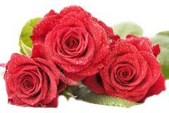 Grote bos van rode rozen Stock Afbeelding