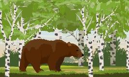Grote bruin draagt in een berk boswilde dieren van Rusland, de V.S., Canada en Scandinavië royalty-vrije illustratie